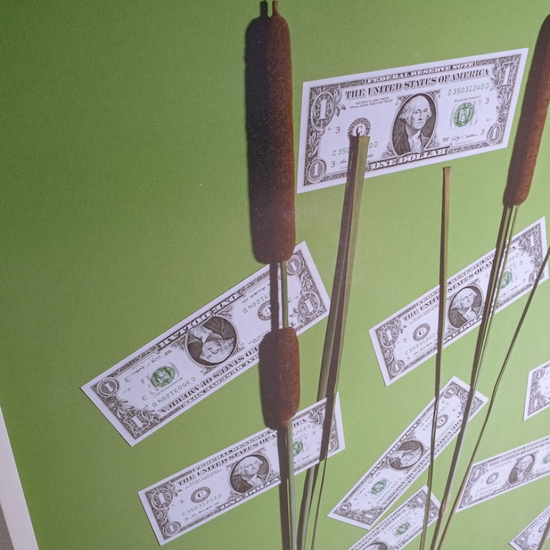 Annette Kelm Money Tree 03