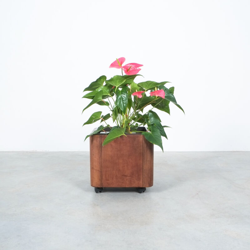 De Sede Leather Planter Ds 47 05