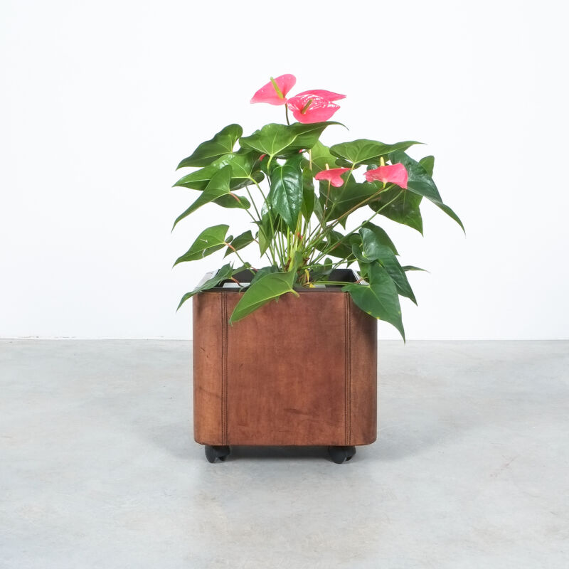 De Sede Leather Planter Ds 47 06