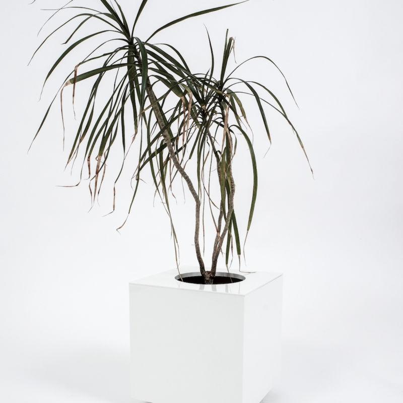 planter5-cini-nils